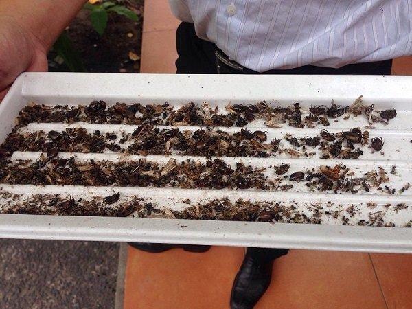 hiệu quả bắt côn trùng đại sinh ds d202