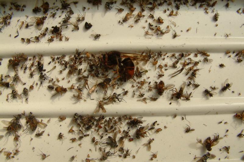 Hiệu quả bắt côn trùng đại sinh